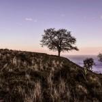 Landscapes 66